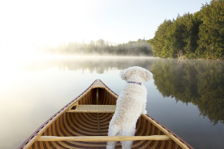 dog in a boat on a misty lake